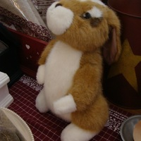 "Pluche : ""Benny Bunny"""